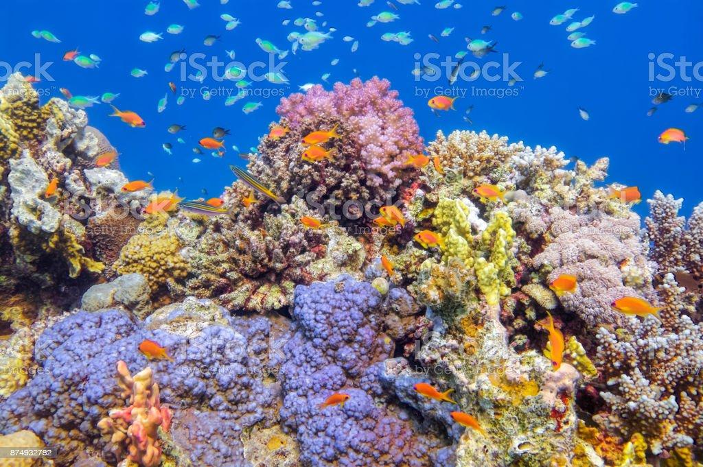 Underwater Sea life on beautiful coral reef with lot of tropical Fish in Red Sea - Marsa Alam - Egypt stock photo