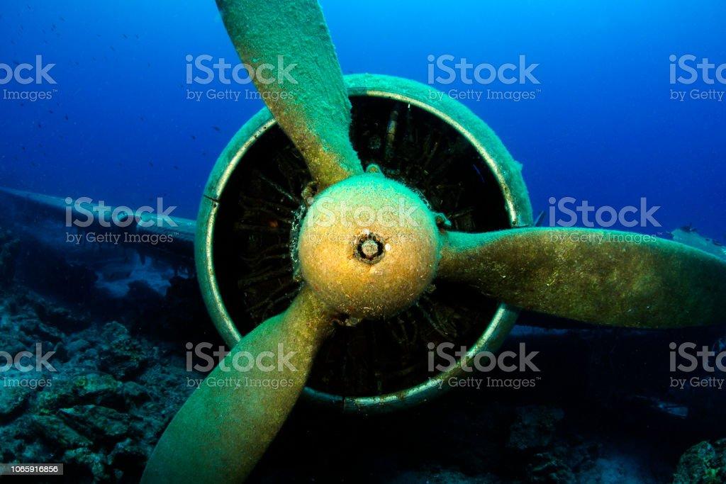 Underwater Sea Life stock photo