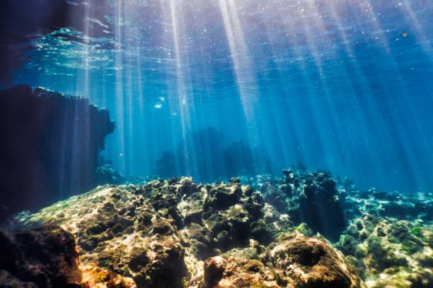 Underwater seascape ko haa island 3 andaman sea krabi thailand picture id1092671624?b=1&k=6&m=1092671624&s=612x612&w=0&h=9h7oas9cgqpj8oqeymphsr 53yn63hfeylrkgobiwas=