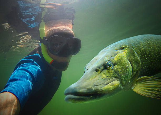 underwater selfie with friend. - wildplassen stockfoto's en -beelden