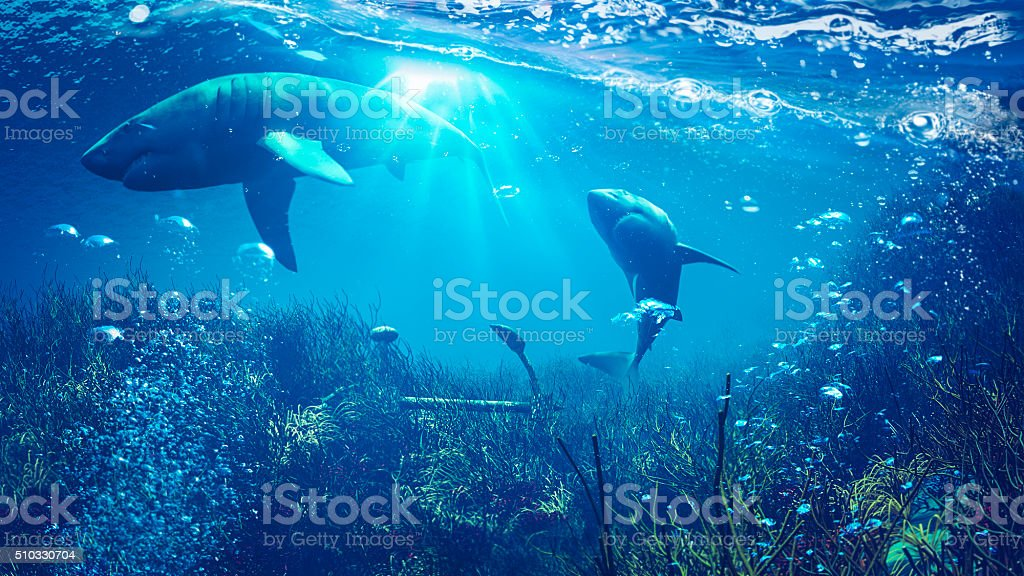 Underwater shark scene stock photo