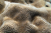 Detail of amazing natural pattern of coral in the Red sea. Underwater shot