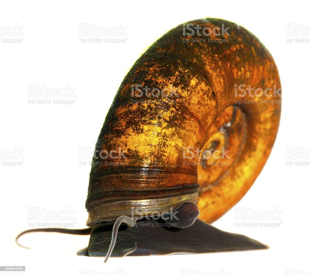underwater snail stock photo