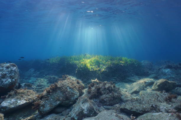 Underwater sunbeams seabed with rocks and seagrass Underwater seascape natural sunbeams through water surface on a seabed with rocks and seagrass, Mediterranean sea, Catalonia, Roses, Costa Brava, Spain at the bottom of stock pictures, royalty-free photos & images