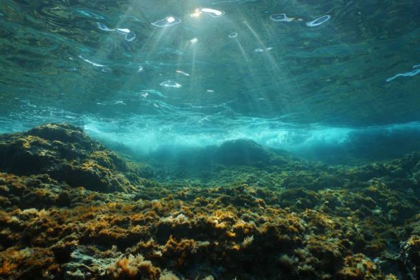 underwater sunlight rocky seabed mediterranean sea - fondale marino foto e immagini stock