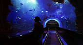 Wide angle view from inside an underwater tunnel through a giant aquarium. Deep blue colors with rays of light coming from the surface. Young woman looking up to the light and marveling at the beauty of the underwater scene.Please refer to this 360° panorama version in highest resolution (XXXL) of above cropped and downsized image: