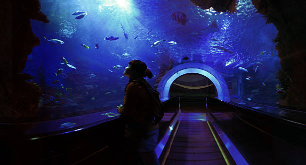 Underwater Tunnel Wide angle view from inside an underwater tunnel through a giant aquarium. Deep blue colors with rays of light coming from the surface. Young woman looking up to the light and marveling at the beauty of the underwater scene.Please refer to this 360° panorama version in highest resolution (XXXL) of above cropped and downsized image: aquarium stock pictures, royalty-free photos & images
