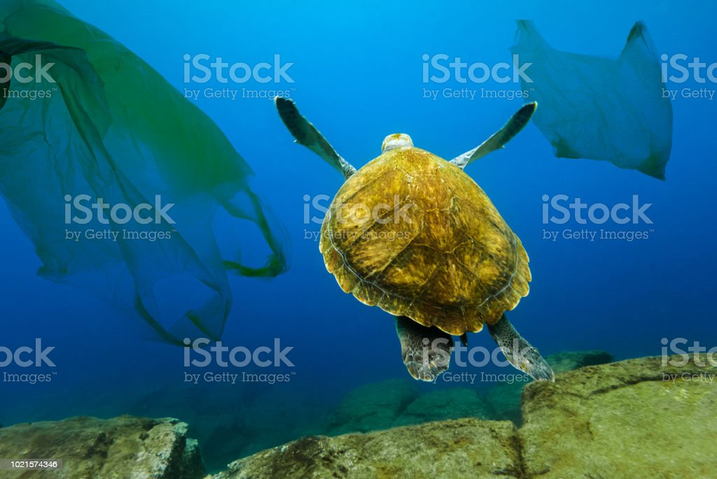 Underwater turtle floating among plastic bags. Concept of pollution of water environment. - Foto stock royalty-free di Ambiente