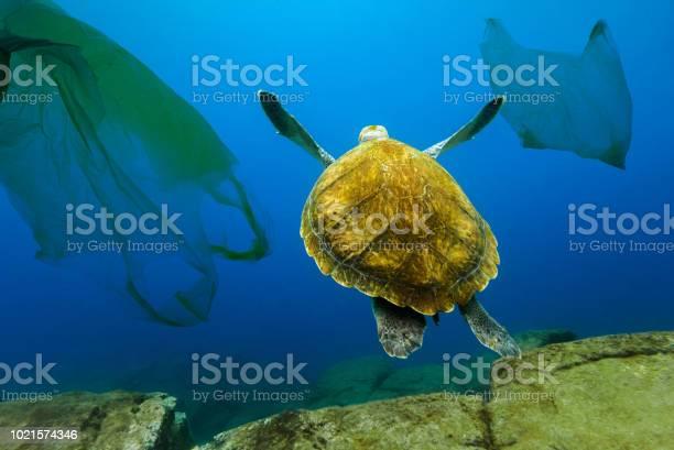 Underwater turtle floating among plastic bags concept of pollution of picture id1021574346?b=1&k=6&m=1021574346&s=612x612&h=vlnpy0rvl6t7qjniebbwvrbzfxkt7iy35vkpekupzd4=
