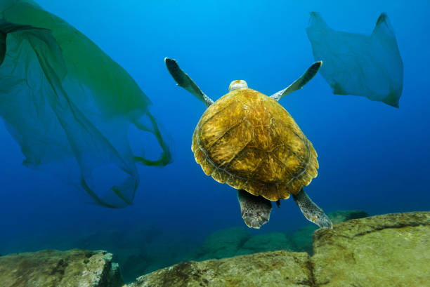 Underwater turtle floating among plastic bags. Concept of pollution of water environment. stock photo