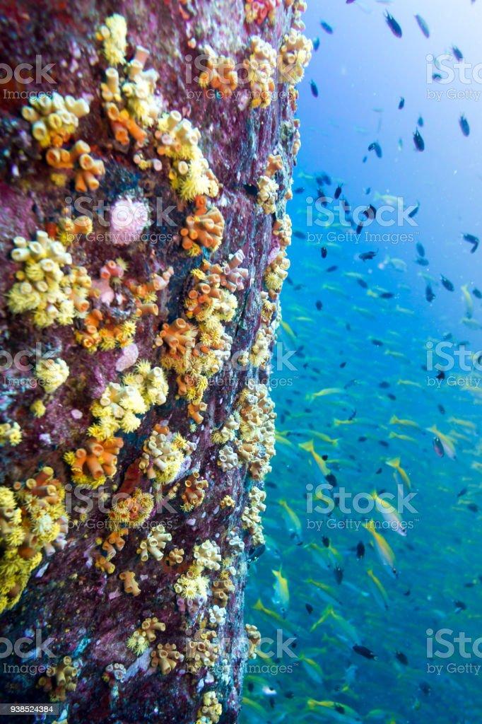 Fotografía de Submarino Los Arrecifes De Coral Vibrante Con Orange ...