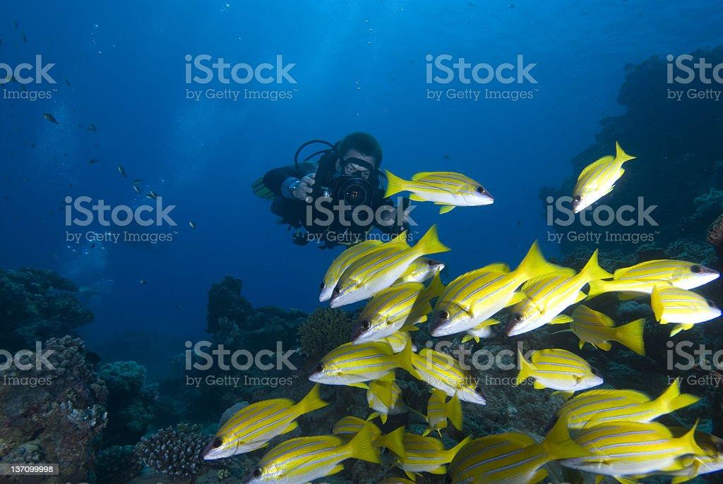 Underwater videographer/camerman stock photo