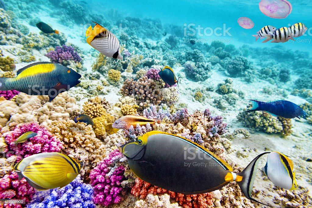 Underwater view of colorful coral reefs and schools of fish stock photo