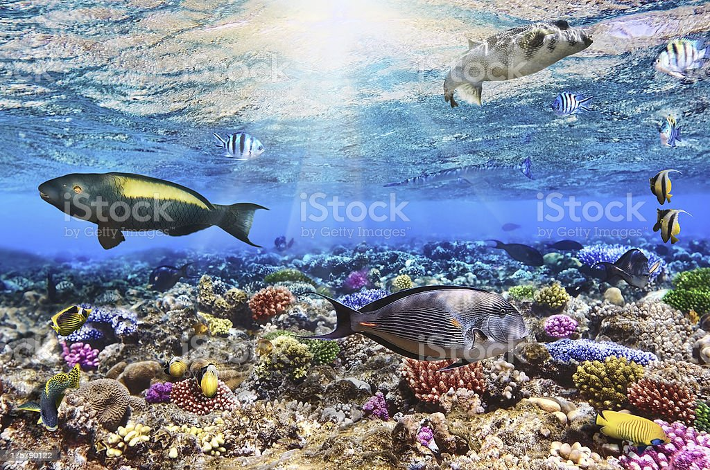 Underwater view of coral and fish in the Red Sea Egypt stock photo