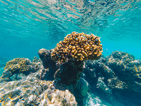 Below water surface in the Indo-Pacific Ocean