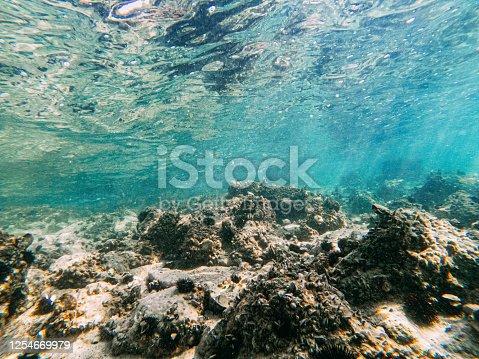 Underwater View Sea Urchins
