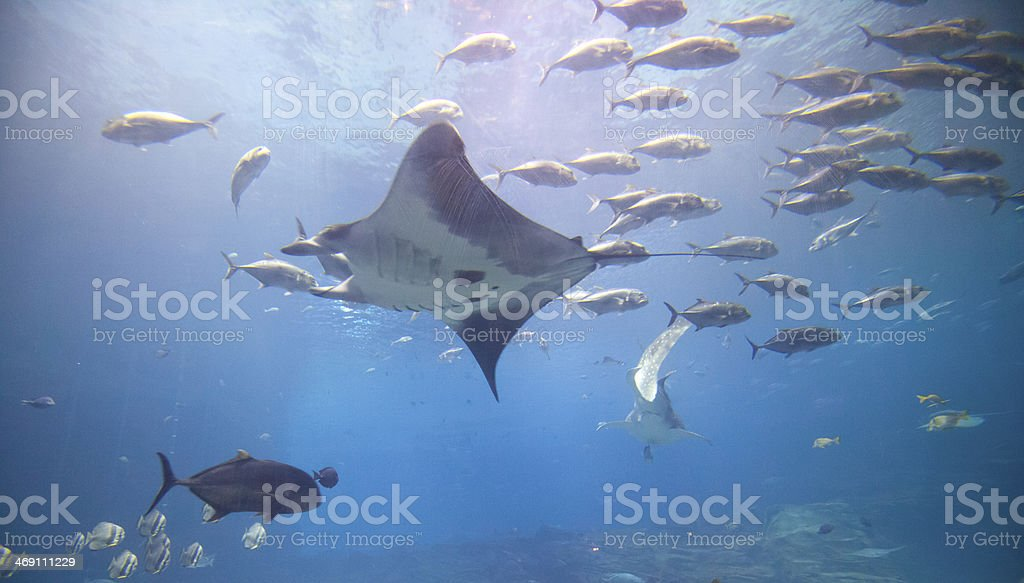 Underwater Wonderland stock photo