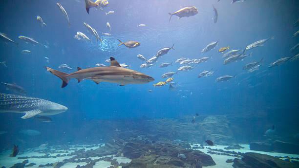 Unterwasser-Wunderwelt – Foto