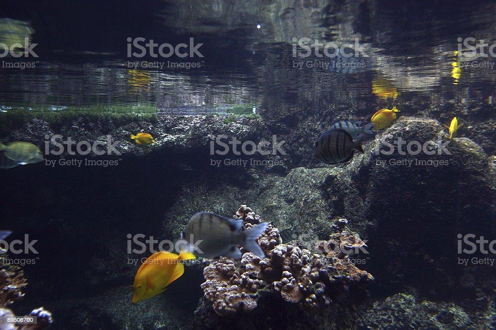 Underwater Wonders 22 royalty-free stock photo