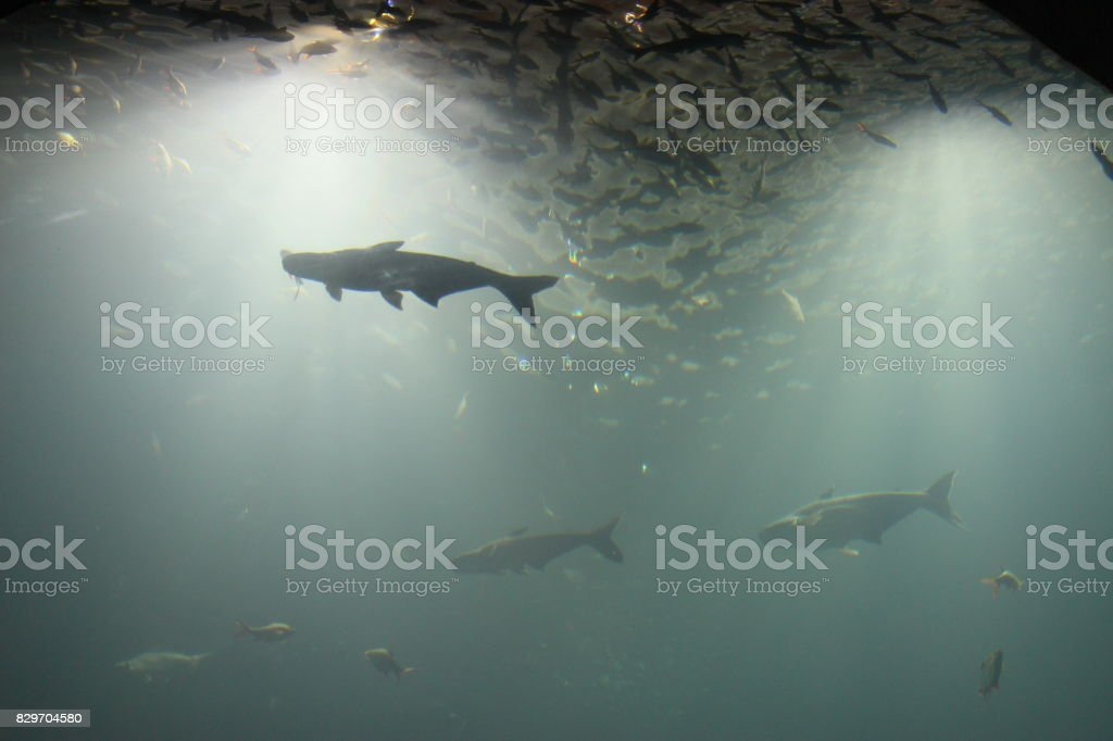 Underwater world a lot of fish. stock photo