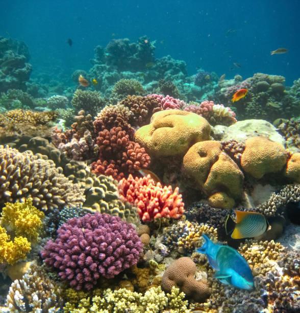 Unterwasserwelt. Korallenfische des Roten Meeres. – Foto