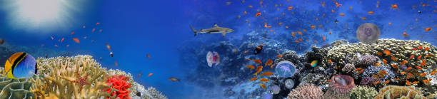 Underwater world - panorama stock photo