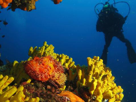 istock Underwater world 170619462
