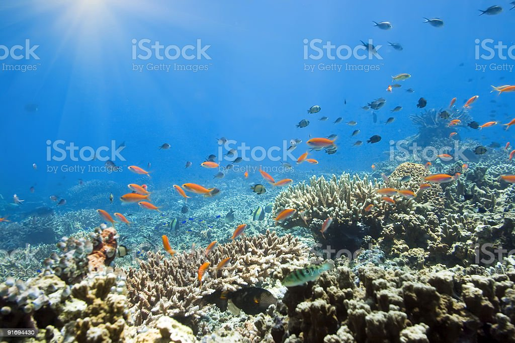 Underwater world stock photo