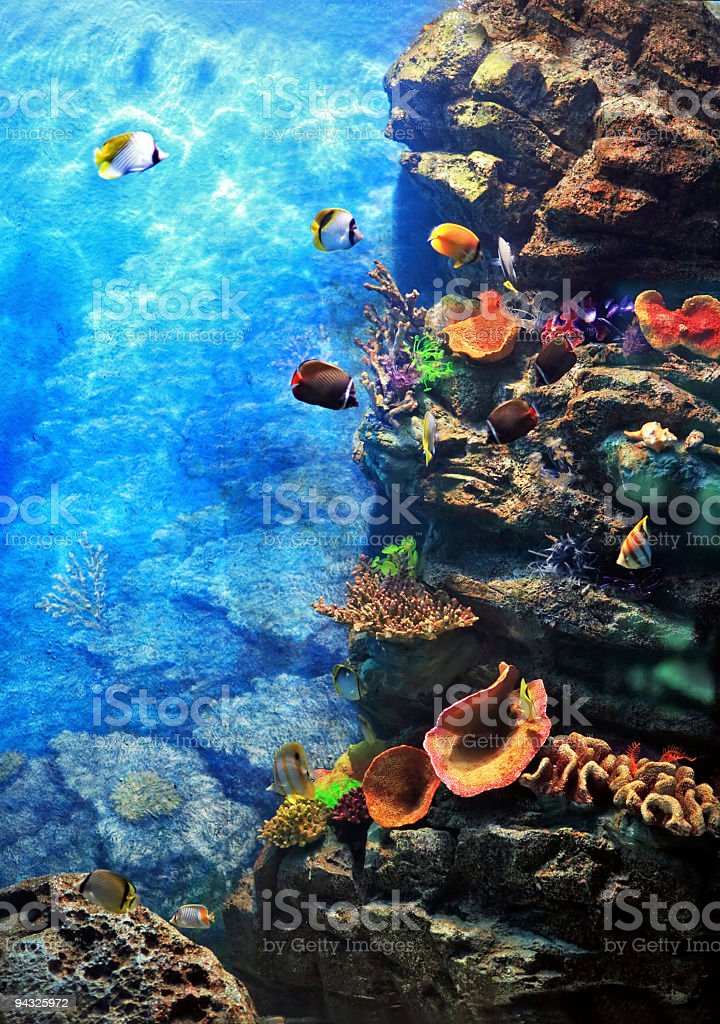 Underwater world. stock photo