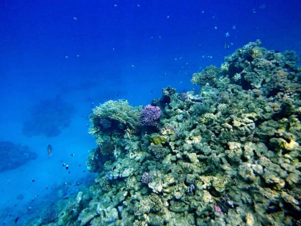 Unterwasserwelt mit Korallen und tropischen Fischen – Foto