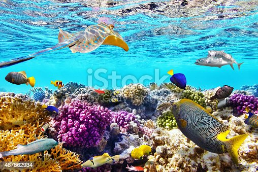 istock Underwater world with corals and tropical fish. 467862934