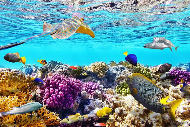 mondo subacqueo di coralli e pesci tropicali. - barriera corallina foto e immagini stock