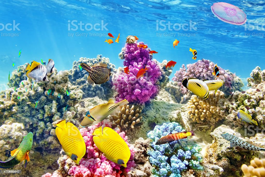 Underwater world with corals and tropical fish. stock photo