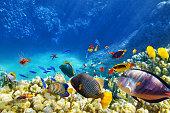 水下世界、サンゴや熱帯魚ます。