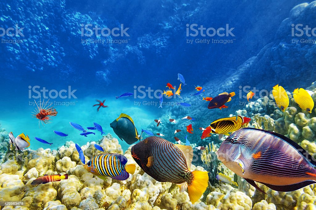 Mundo submarino con corales y peces tropicales. - foto de stock