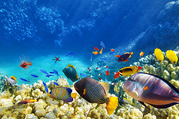 Underwater world with corals and tropical fish. Wonderful and beautiful underwater world with corals and tropical fish. aquarium stock pictures, royalty-free photos & images