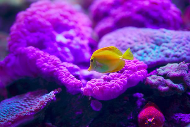 mundo subaquático com corais e peixes tropicais - organismo aquático - fotografias e filmes do acervo