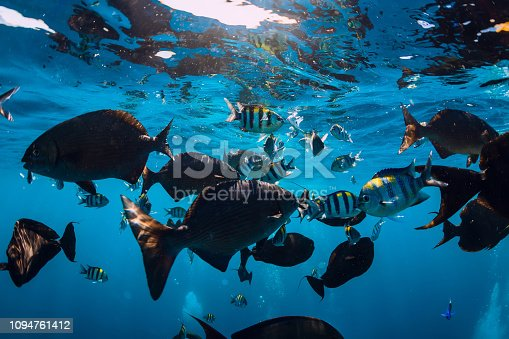 istock Underwater world with tropical fish in blue sea 1094761412