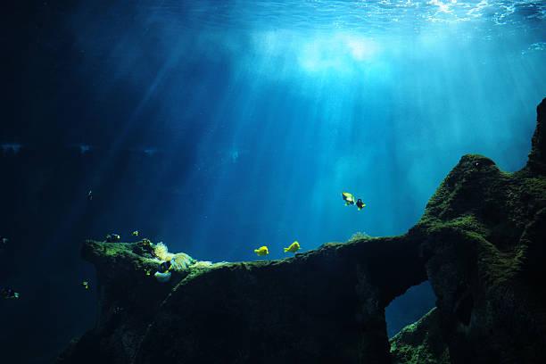 mondo sottomarino xlarge - under the sea fish foto e immagini stock