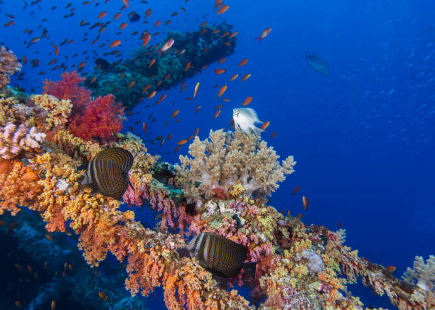 Underwater wreck covered in colorful coral reef stock photo