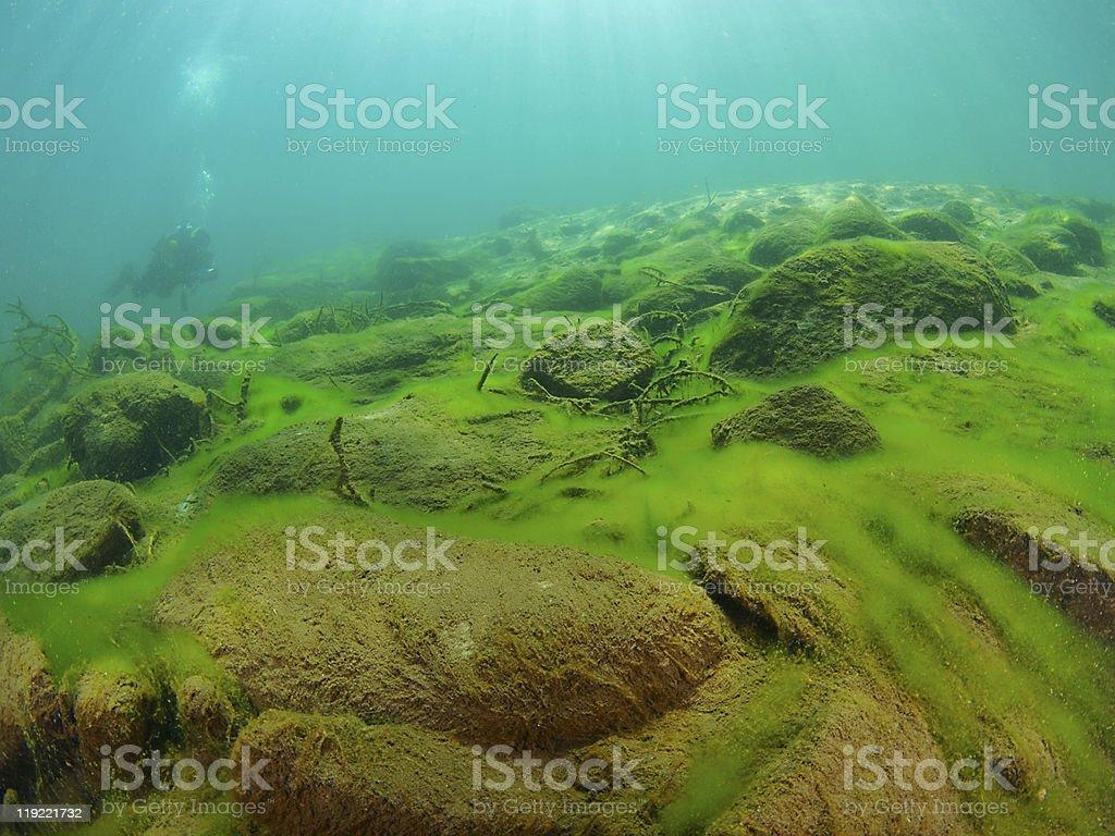 underwater-landscape stock photo