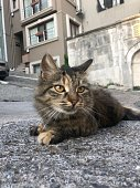 Undomestic Cat