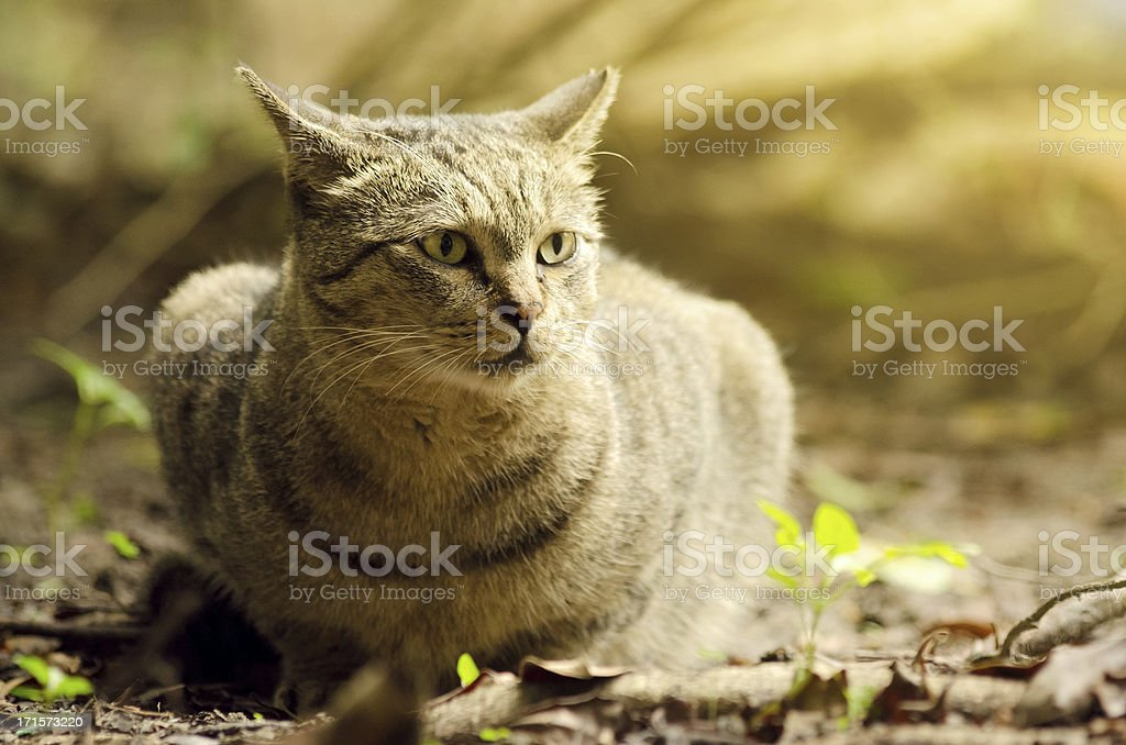 Undomesticated cat sit in park in sunny day.