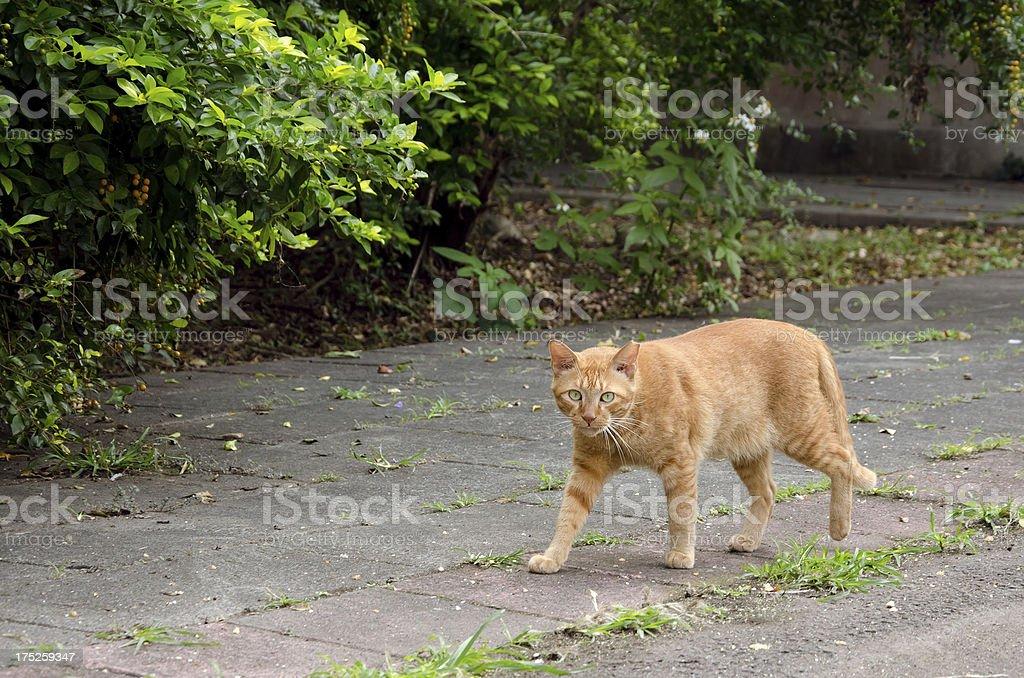 Undomesticated cat in city.