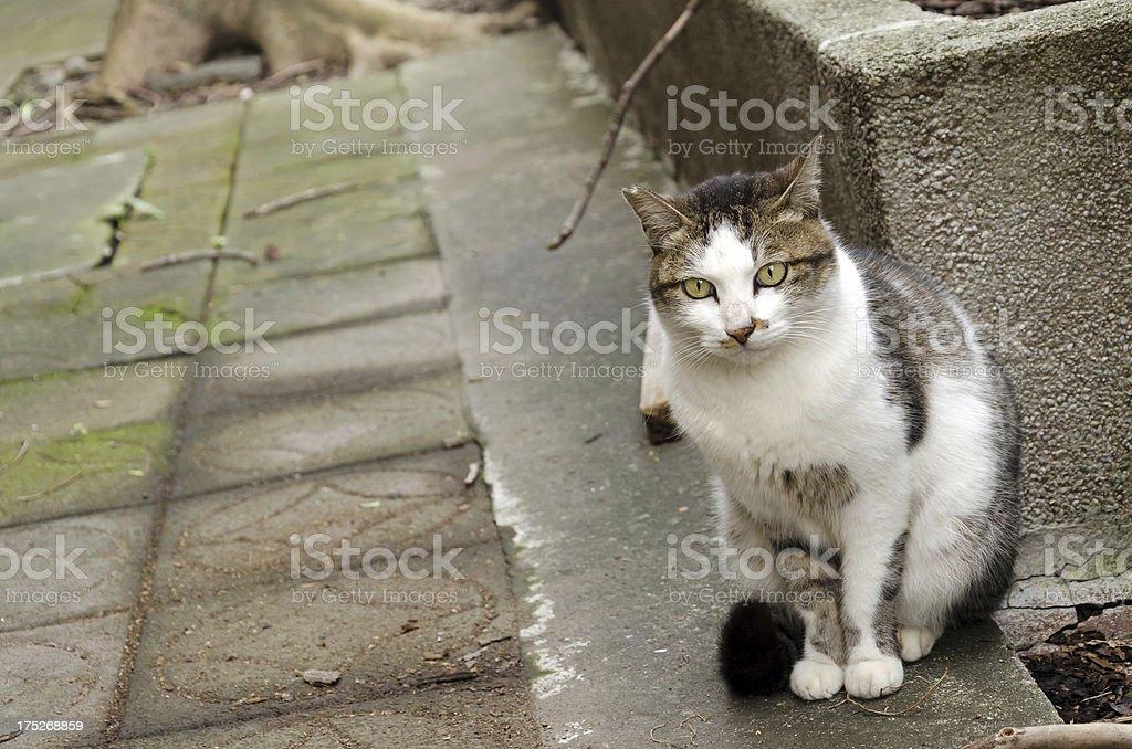 \'Undomesticated cat portrait, beautiful cat standing on street in...