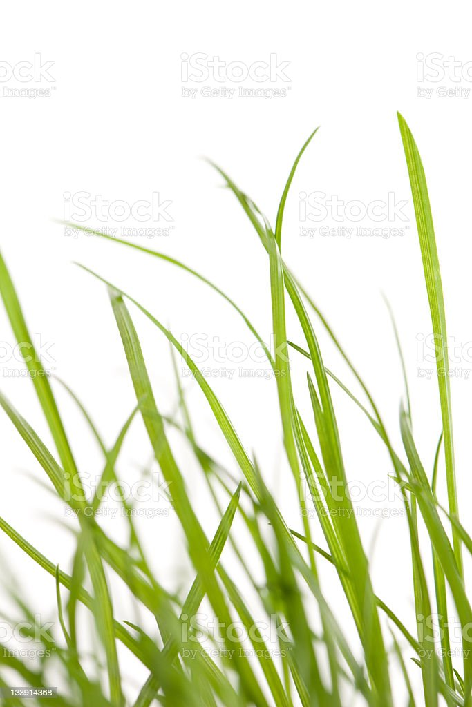 Uneven Grass royalty-free stock photo
