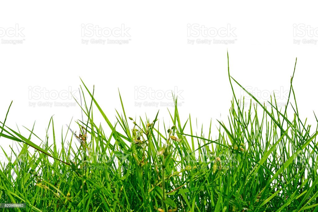 uneven green grass isolated on white background stock photo