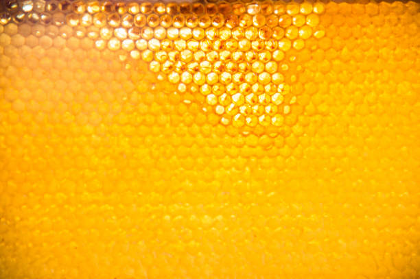 Unfinished fresh honey in honeycombs stock photo