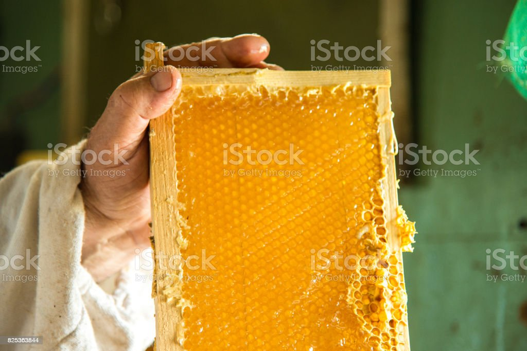 Unfinished fresh honey in honeycombs that are placed in a frame in hands beekeeper stock photo