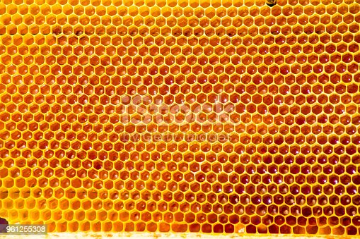 istock unfinished honey making in honeycombs 961255308